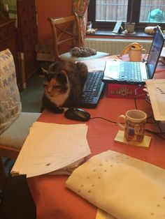 """What do you mean I'm not helping you write your thesis?"" - Bailey"