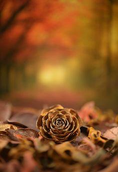 ❧ L'automne ❦ 2