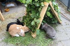 Hay Rack with Sitting Platform - Kaninchen Rabbit Shed, Rabbit Run, House Rabbit, Rabbit Toys, Pet Rabbit, Bunny Cages, Rabbit Cages, Diy Bunny Toys, Rabbit Enclosure