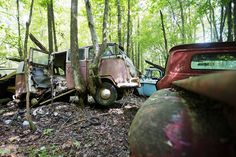 Most of the vehicles at Old Car City haven't moved in so long, nature has overtaken them.    - RoadandTrack.com