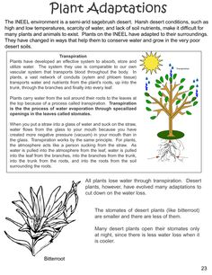 desert plants reading comprehension worksheet science pinterest comprehension. Black Bedroom Furniture Sets. Home Design Ideas