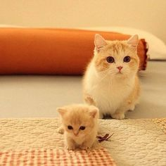 """Kitten and her mom ❤❦♪♫Thanks, Pinterest Pinners, for stopping by, viewing, re-pinning, & following my boards. Have a beautiful day! ^..^ and """"Feel free to share on Pinterest ♡♥♡♥ #catsandme"""