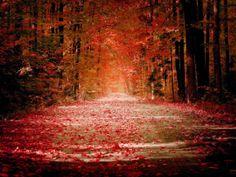 കവിതകളുടെ കയ്യൊപ്പ് : seasons