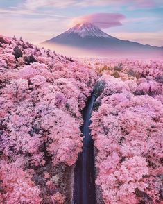 It's cherry blossom season around Mount Fuji and all over Japan right now, how breathtaking ! 🌸🗻🇯🇵 Are Japan's cherry blossoms on your bucket list ? Tag your travel partner ! — 📍 — 📸 Photo by  Nis Wonderful Places, Beautiful Places, Beautiful Life, Beautiful Flowers, Landscape Photography, Nature Photography, Travel Photography, Photography Aesthetic, Stunning Photography