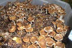 34 Delightful Mushrooms images | Mushrooms, Stuff mushrooms, Stuffed