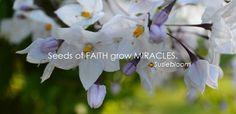 Grow miracles
