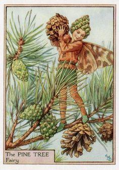 Pine Tree Flower Fairy Vintage Print c.1950 by FlowerFairyPrints, $11.95