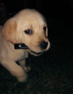 """Explore our web site for more details on """"Golden Retriever dogs"""". It is actually… Explore our web site for more details on """"Golden Retriever dogs"""". It is actually a great spot to learn more. Puppy Care, Pet Puppy, Online Pet Supplies, Dog Supplies, Cute Puppies, Cute Dogs, Baby Animals, Cute Animals, Bad Girl Aesthetic"""