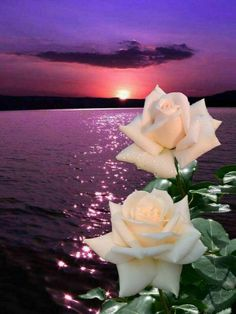 Naturaleza Good Night Gif, Good Night Wishes, Rose Images, Flower Images, Beautiful Moon, Beautiful Roses, Fotos Do Face, Birthday Wishes Flowers, Flower Phone Wallpaper