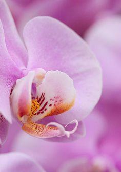 42 besten Orchideen Bilder auf Pinterest in 2018
