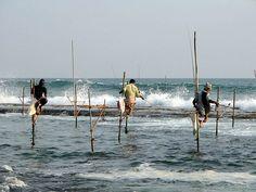 800px-Stilts_fishermen_Sri_Lanka_02