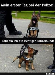 My first day at the police . - Cats and Dogs House Funny Babies, Funny Dogs, Funny Animals, Cute Animals, Tierischer Humor, Man Humor, Really Funny, Funny Cute, I Love Dogs