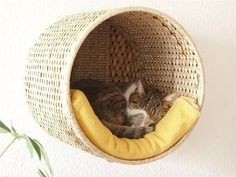 Wicker wall mounted cat bed lounger. DIY (hacked) from an Ikea basket that is bolted to a sisal scratch board as a counterweight and mounted on the wall. Add a pillow or blanket & kitty has a new perch lounge. Inspirational picture via Schwedenhacker.