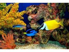 Setting up a Salt water fish aquarium. Saltwater Fish Tanks, Saltwater Aquarium, Salt Water Fish, Salt And Water, Aquarium Fish For Sale, Two Fish, Marine Aquarium, Sea And Ocean, Ocean Deep