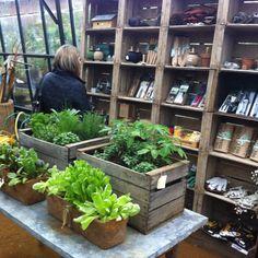 Brilliant vintage garden centre Petersham nursery near Richmond Surrey