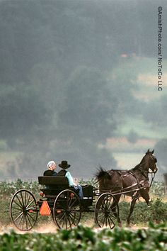"""A Romance Begins"" [Photo by Bill Coleman 1925-2014] ~ Sarah's Country Kitchen ~"