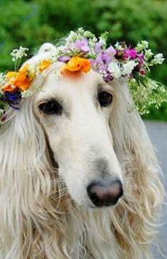 Flower Dog..
