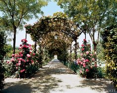 Janet de Botton\'s exquisite rose-scented pergola in the South of France.