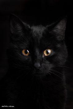 Black Cat by CRISTIAN SILVA | FOTOGRAFO on 500px