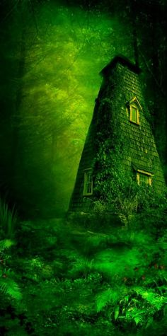 Green Enchanted Forest