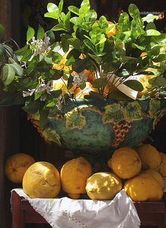 Positano Lemons………ON THE DINING-ROOM TABLE……HOW GOOD THEY SMELL AND OH! HOW BEAUTIFUL THEY LOOK………ccp