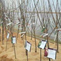 Kiskertünk védelme gyógynövényekkel - Kapanyél Plants, Plant, Planets