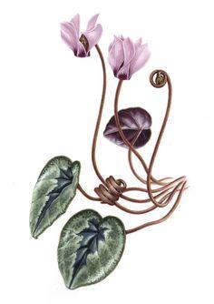 by Botanical artist Işık Güner