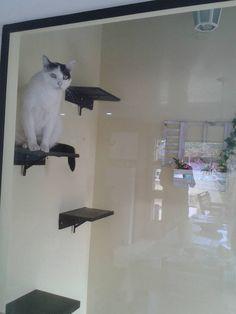 Escadinha para gato subir no telhado!!