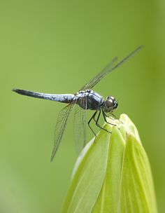 .....dragonfly at work....