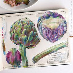 Artichoke | botanical sketch © Elke Hanisch