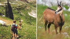 Najkrajšie hrebeňovky na Slovensku: Zážitok, ktorý ti ostane na celý život Goats, Horses, Animals, Animales, Animaux, Animal, Animais, Horse, Goat