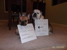 """dog shaming"" - a form of cruel and unusual punishment ;-)"