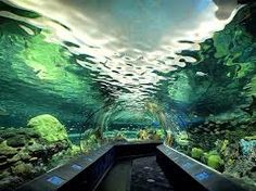 take a stroll in the underwater tunnel at the Ripley's Aquarium