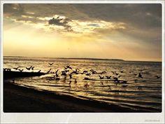 whitstable sunset birds sea