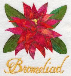 Bromeliad Watercolor