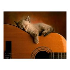 Super cute Funny Cats Pictures ❤ liked on Polyvore featuring animals, backgrounds, cats, pictures and music