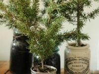 Heb je geen ruimte voor een kerstboom?! Plaats een paar takken in  verschillende potten en creëer je eigen dennenbos. #kerstmis #kerstdecoratie #kerstsfeer #homedecoration #karelhendriksen #tuincentrum #KH_TC