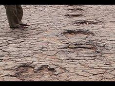 Dinossauros um passado não tão distante de nós