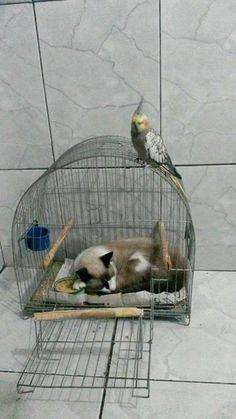Sleepy time..... - Rivi Del - Google+