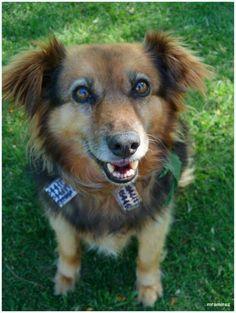 #Perro de Costanera...#vagabundo al cuidado de la Sociedad Protectora de #animales (el collar con numeros de teléfono me mata!)