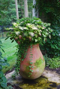~terra cotta container with coleus