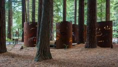 Tucked in the New Zealand Redwood forest, these bathrooms are something to marvel at. They blend in and add to the scenery instead of taking away from natures beauty. Redwood Forest, Bathrooms, Scenery, Public, Marvel, Artist, Nature, Projects, Beauty