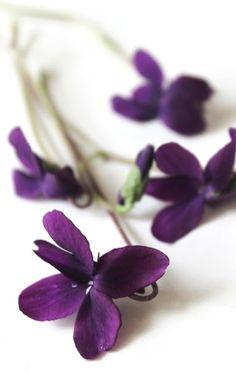 Bellasecretgarden — ioluli:   (via luli)