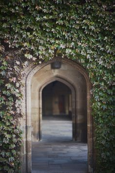 Attends the University of Sydney (studying law) Australia Visa, Sydney Australia, University Of Sydney, Salt Water Fish, Photo Location, Beautiful Space, Study Abroad, Pathways, Wander