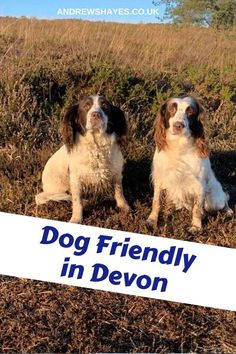 At Andrewshayes in East Devons Best Touring Motorhome Static Caravan Camping DOG FRIENDLY. We love Dogs and have a special area for their exercise. Dog Friendly Holidays, Holiday Park, Days Out, Dog Walking, Dog Friends, Motorhome, Devon, Caravan, Touring