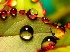 rain kissed autumn leaves