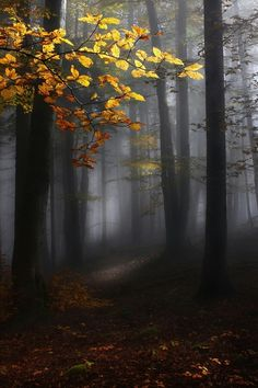 Golden tree stands in the misty forest