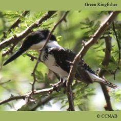 All Birds of North America | Birds of North America