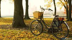bicycle autumn - Google zoeken