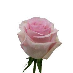 Rose Nena Light Pink 40 cm 1  #MYFAVORITEBLOOMS2 #bloomsbythebox #wedding   For table arrangements